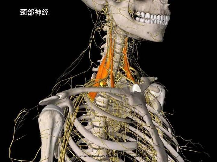 瑜伽练习肩部疼痛需要力量的稳定