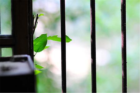 师生文苑——《窗外的那抹新绿》《窗外的廘眸》《窗外的星空》