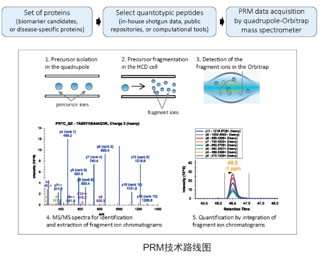 PRM定量蛋白质组学