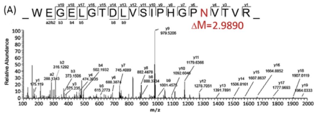 N糖基化位点分析