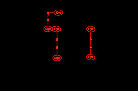 二硫键配对分析