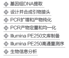 16S rDNA鉴定
