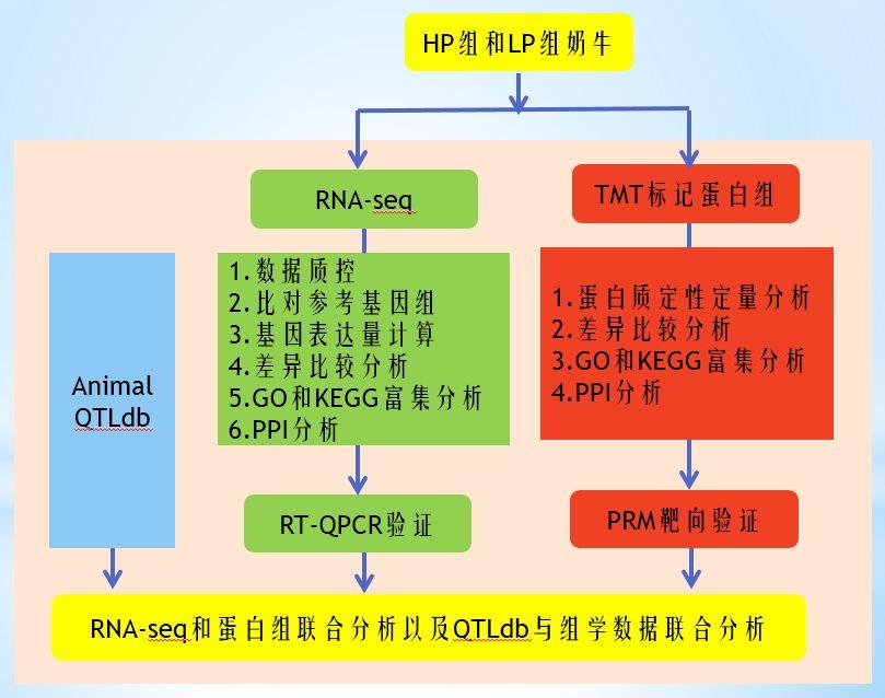 客户文献 | 比较转录组学和蛋白质组学分析鉴定了中国荷斯坦奶牛与乳脂性状相关的关键基因
