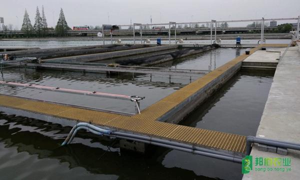 上海嘉定刀魚繁育基地