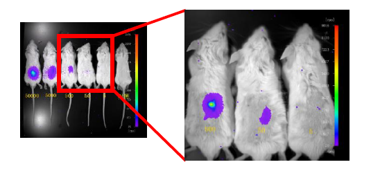 小动物活体影像系统-Berthold NightOWL in vivo Imaging System