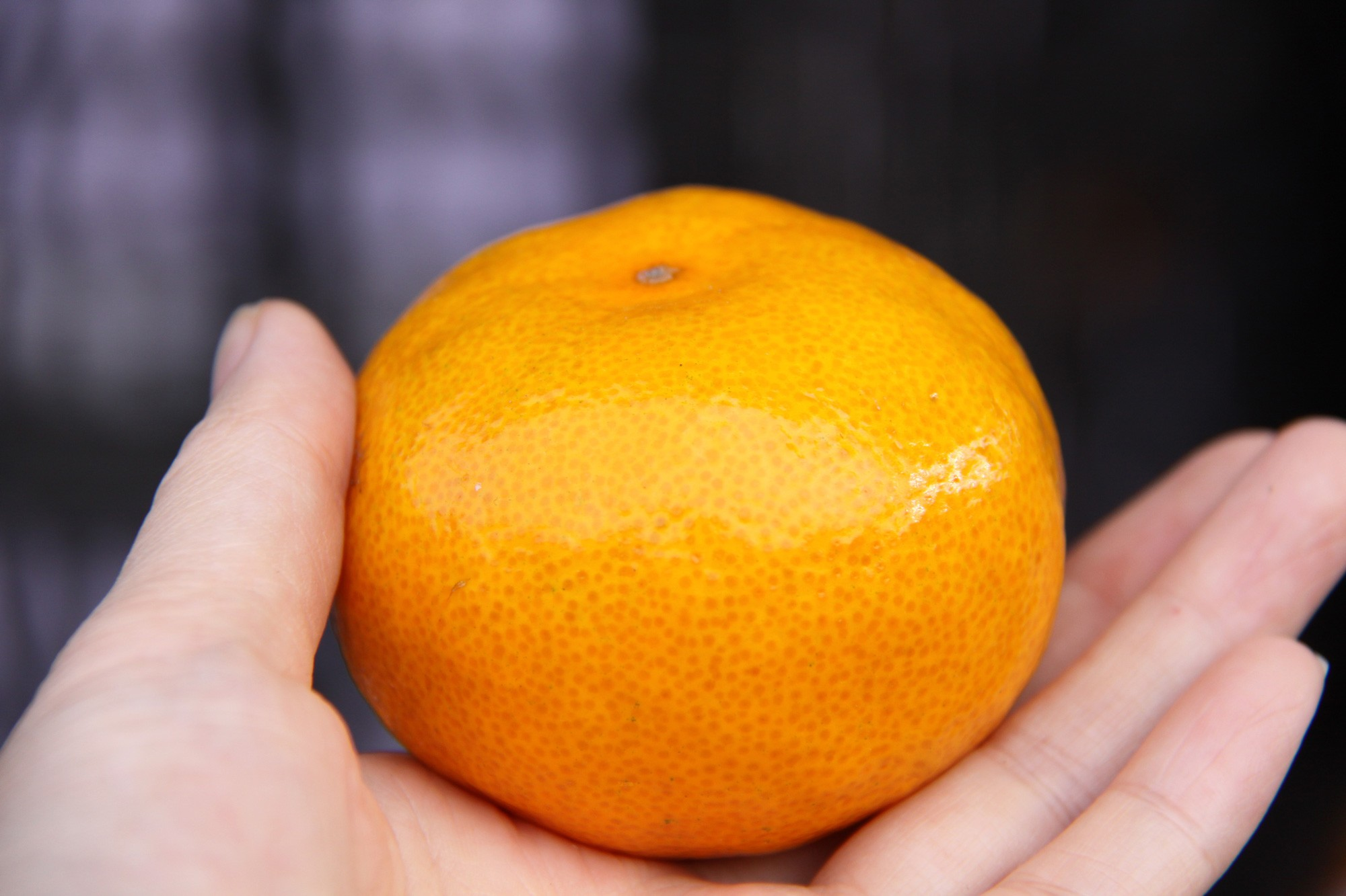 价格跌至最底,消费者依旧不买账,砂糖橘该何去何从?
