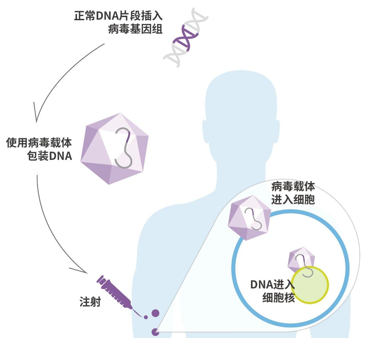项目合作 | 勃林格殷格翰与克睿基因合作开发新型AAV载体,以开发下一代肝靶向基因治疗