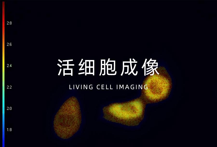 活细胞成像
