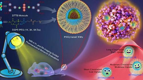 广州医科大学郭伟圣教授课题组——光声与纳米药物在体内的实时药物评价