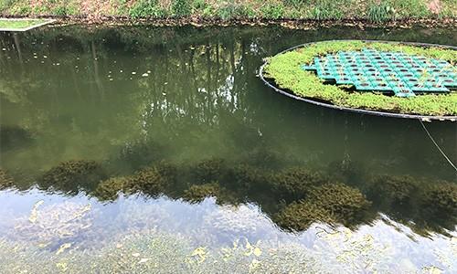 上海奉贤某港生态治理项目