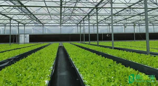 安徽定遠農業科技示范園溫室改造項目