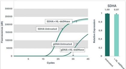 基因组DNA(gDNA)去除试剂盒