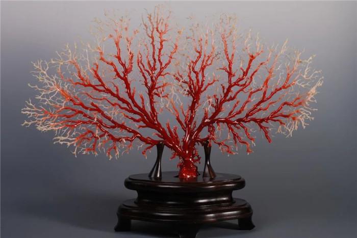 珍稀珊瑚大型专题展即将在深圳启幕