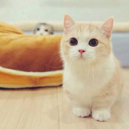 小猫咪感冒了怎么办,宠物咨询去了解一下