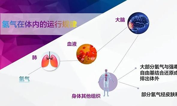 科学盘点 | 每日一个知识点:氢分子生物医学的发展