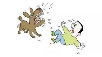 国晖北京- 故意逗狗被咬伤,是否能向主人追责?